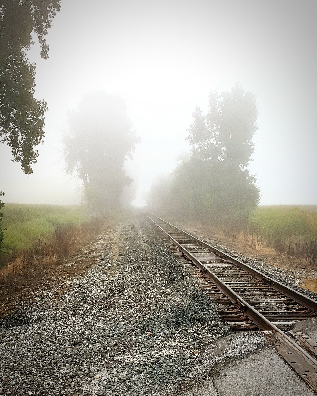 railroad track, fog, tree, rail transportation, transportation, the way forward, foggy, day, nature, weather, landscape, no people, railway track, outdoors, beauty in nature, mist, grass, scenics, sky