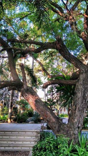 พักตรงนี้ Freshenup Beauty In Nature Go Green Feel Green Tree