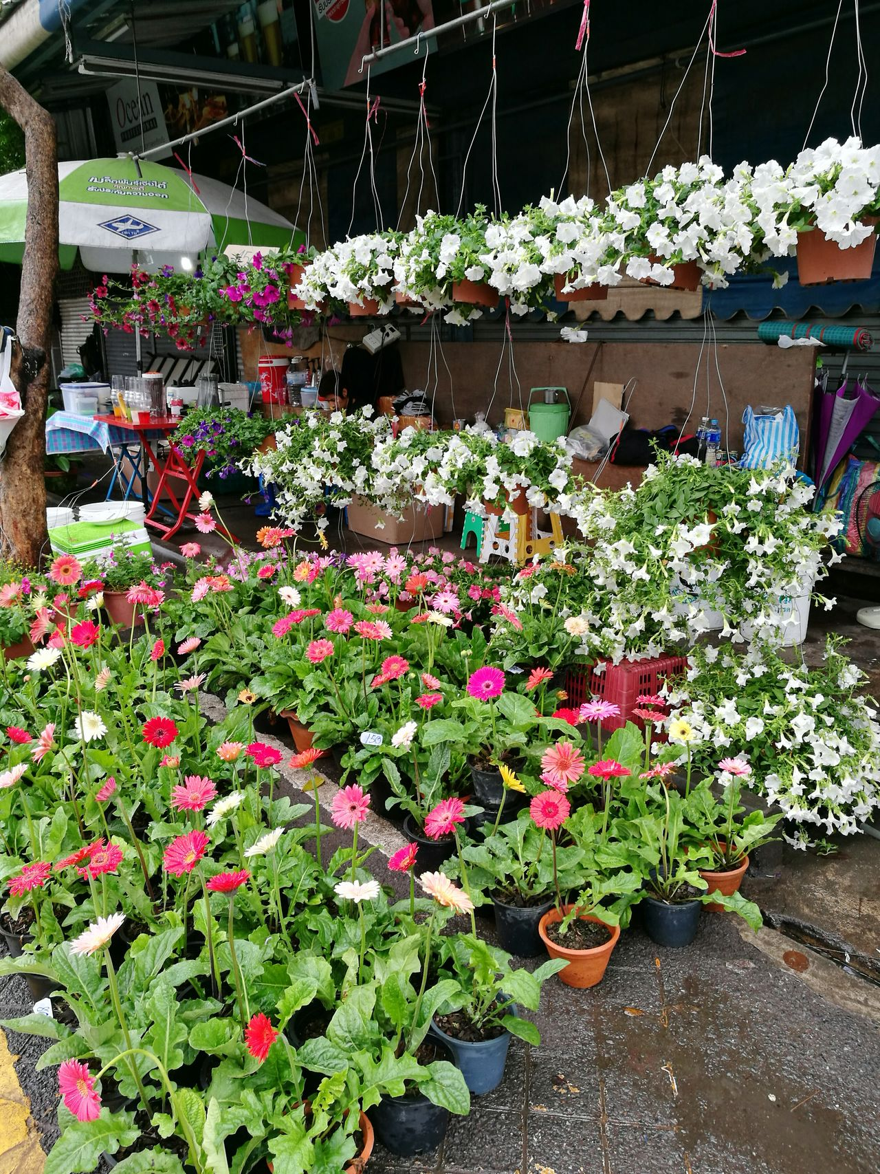Flower Plant Beauty In Nature Blossom For Sale Flower Shop Flower Stall Flower Market Chatuchak Weekend Market