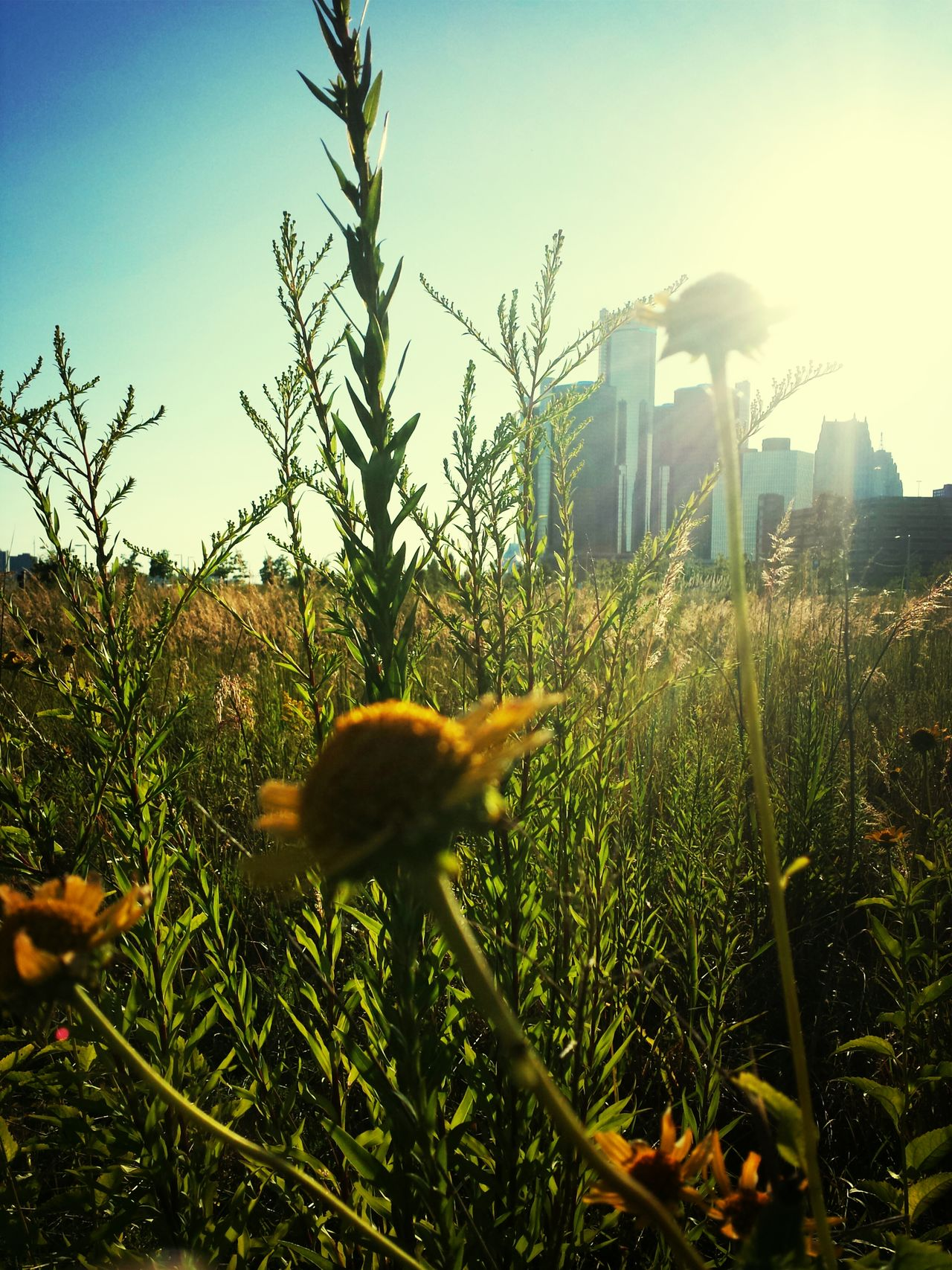 Beautiful stock photos of detroit, Architecture, Beauty In Nature, Blossom, Botany