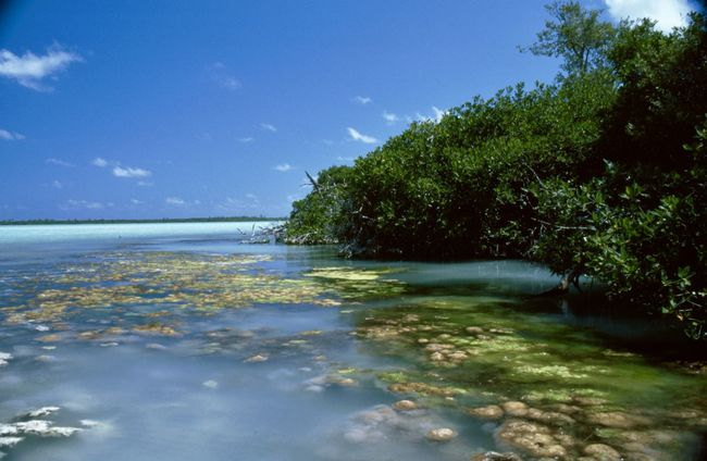 Mexico Mangrove Travelingtheworld  Travelphotography Travel Photography Travel Destinations Travelling Photography Traveling Photography Traveling México Clouds And Sky Sian Khan Biosphere Yucatan Mexico Water_collection Water Surface Watercolor