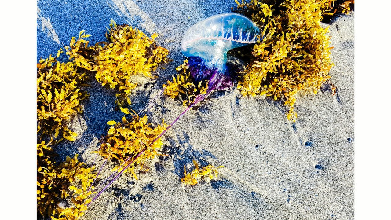 Ft Lauderdale Hollywood Beach FL Washed Up Jellyfish Jelly No People First Eyeem Photo EyeEmNewHere