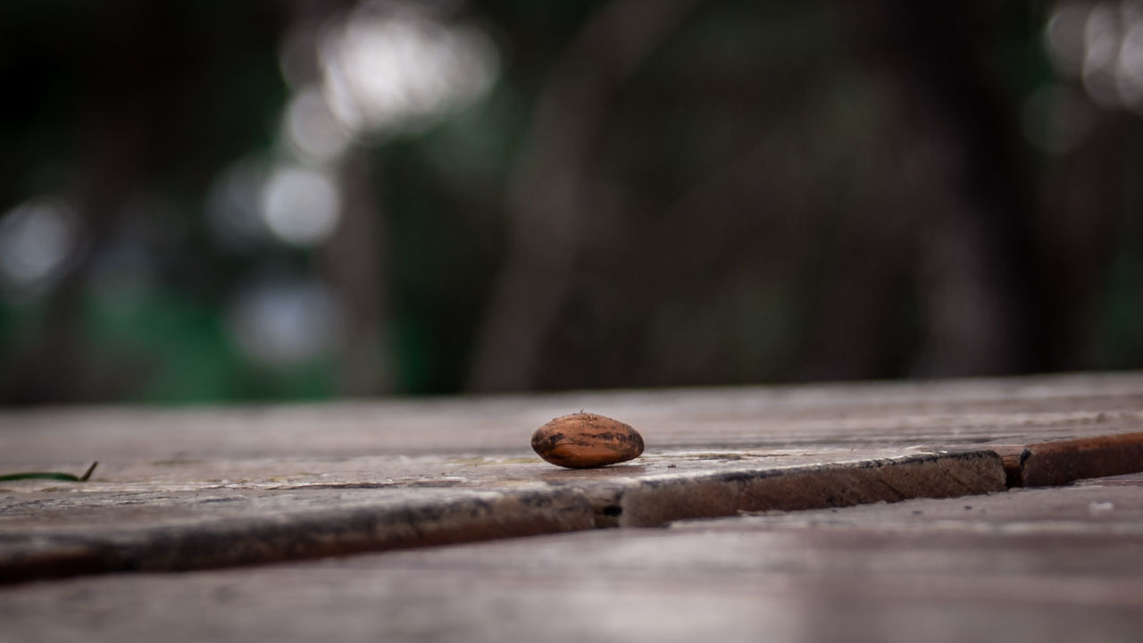 Nut Nuts Macro Wood Focus Food Nature Brown Plank Close-up No People Outdoors Fragility Day Tree Spring