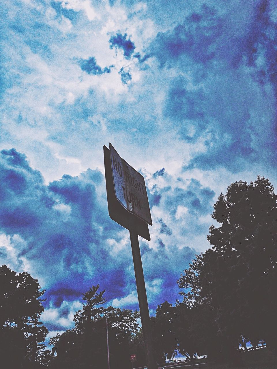 tree, sky, low angle view, cloud - sky, no people, day, outdoors, road sign, nature