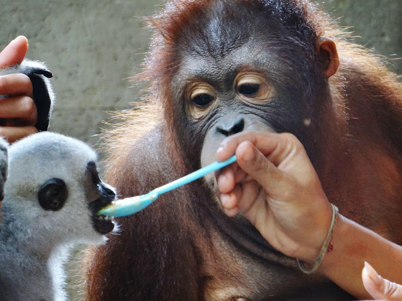 Bali, Indonesia Monkeys Monkey Eating Tiere Animal Animals Affen Zoo Feeding  Feeding Animals Feeding Monkeys Fütterung