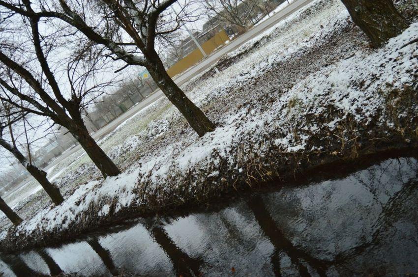 Tree Nature зима снег река Природа Reflection