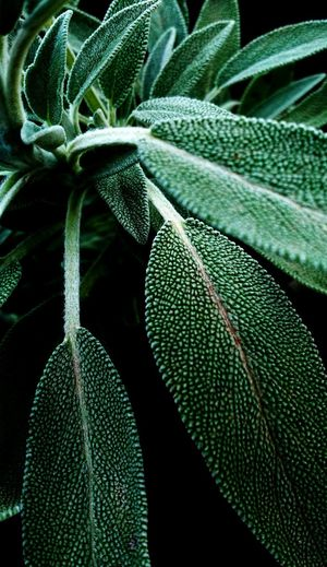 3XSPUnity Green Leaves Nature Close-up Leaf Full Frame Backgrounds Outdoors Day Beauty In Nature Fragility