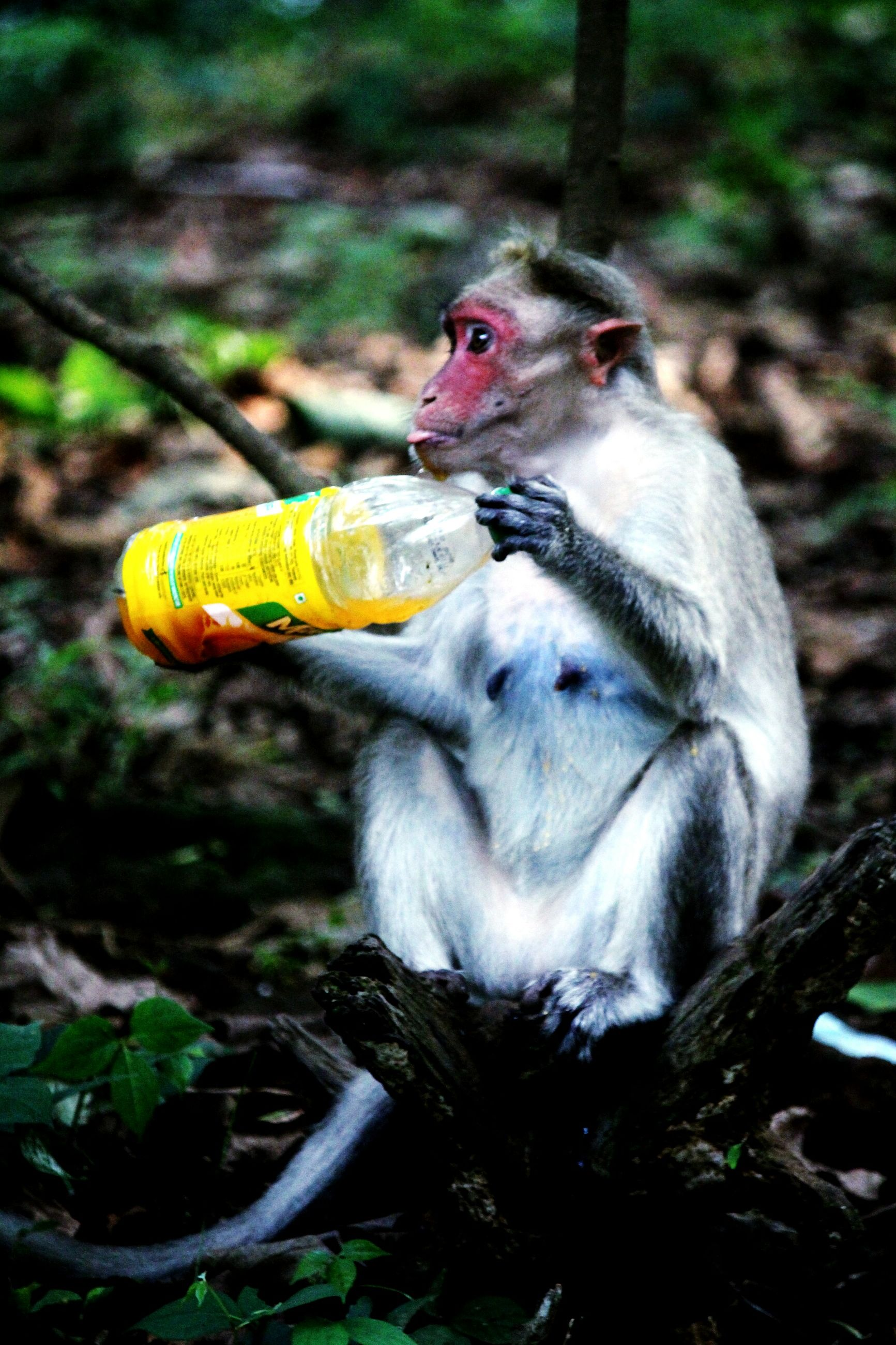 one animal, animals in the wild, animal themes, no people, day, outdoors, monkey, mammal, nature, close-up, bird