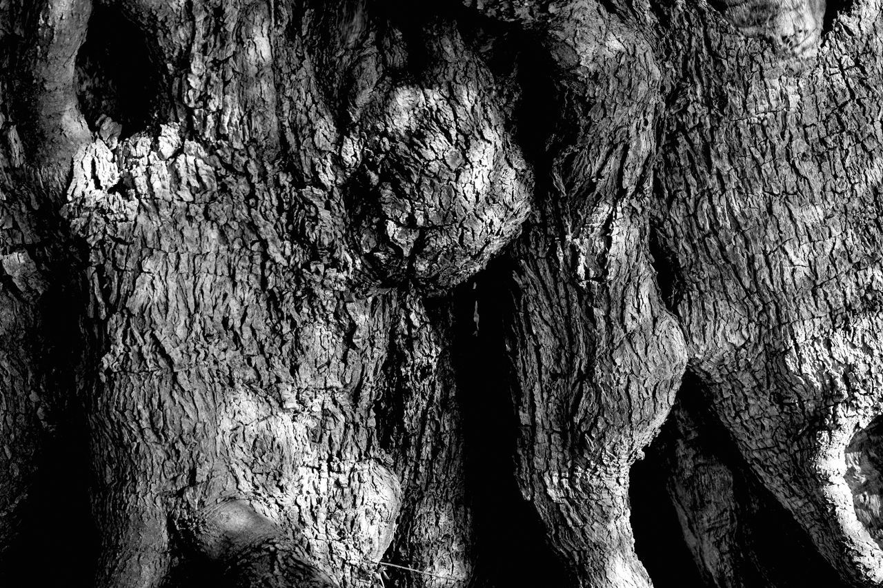 Abstract Abstract Photography Background Photography Backgrounds Beauty Beauty In Nature Black Black & White Black And White Blackandwhite Close-up Day Full Frame Nature Nature No People Old Tree Old Tree Trunk Olive Tree Outdoors Textured  Tree Tree Trunk