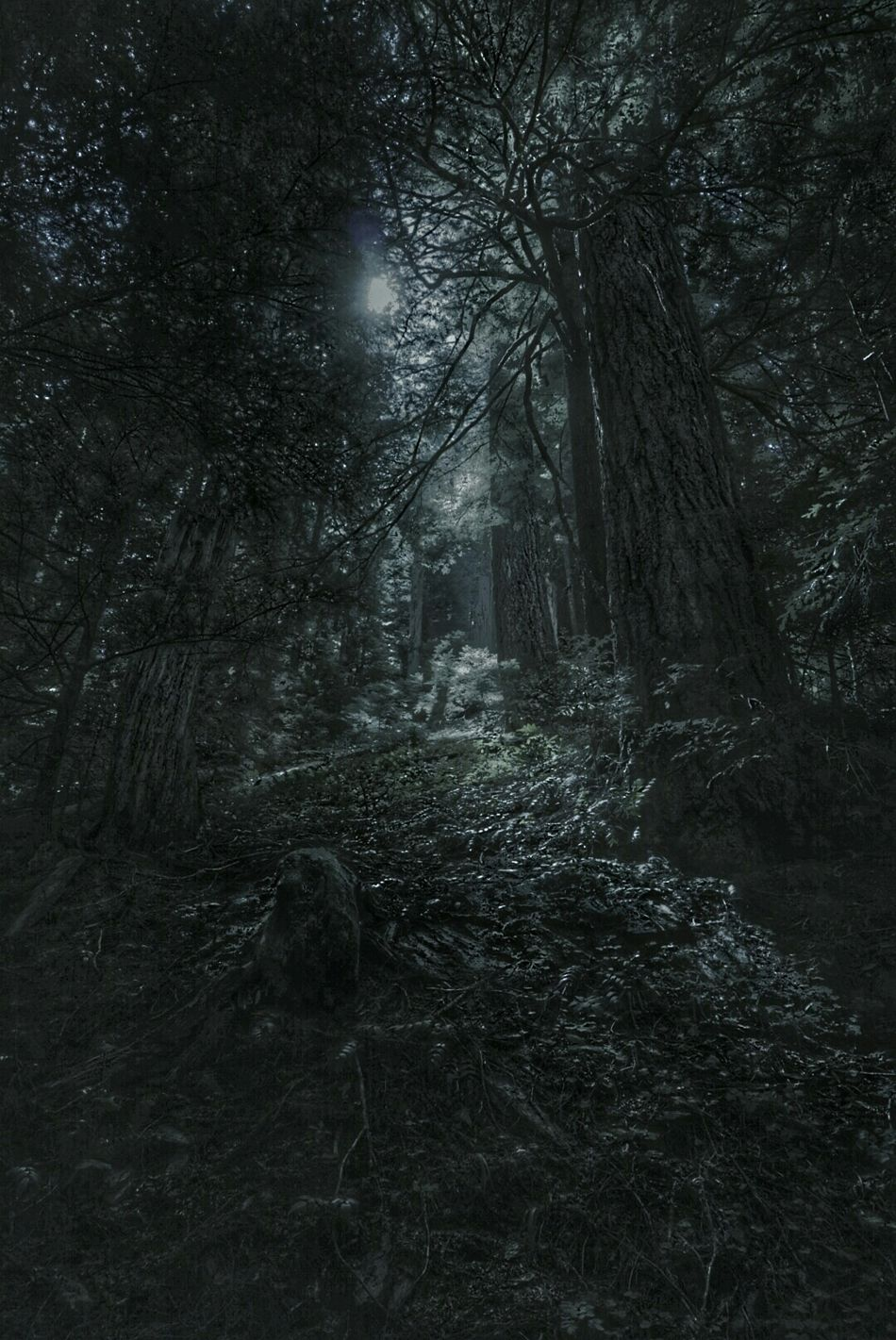 Forest Moonlight Enchanted