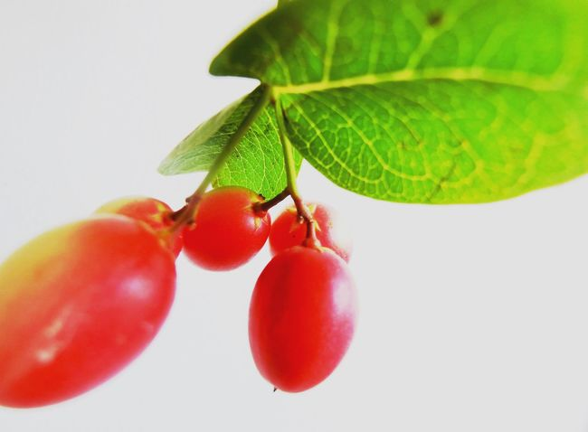 Karonda Fruit Food And Drink Karoda Fruit Food Bengal Currant Fruits Indoors  Healthy Eating Fruit Nature Indoors  Ready-to-eat Red Indoors  No People Indoors