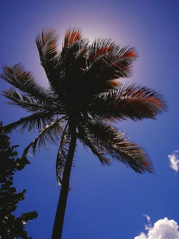 Found On The Roll Perfect Nature Photo Eyem Gallery Photography Puertorico EyeEm Gallery Taking Photos Picture Nature Photography Puerto Rico Kanyn Sun Sky And Clouds Beautiful Photoshoot Sun Behind The Tree Palm The Magic Mission P9 Huawei