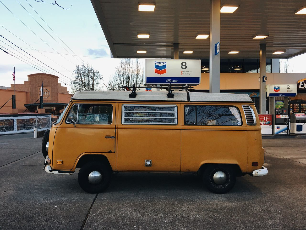 a rare encounter, seen while feeding from a local source. VWbus