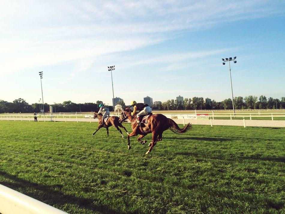 Futam Horse Racing