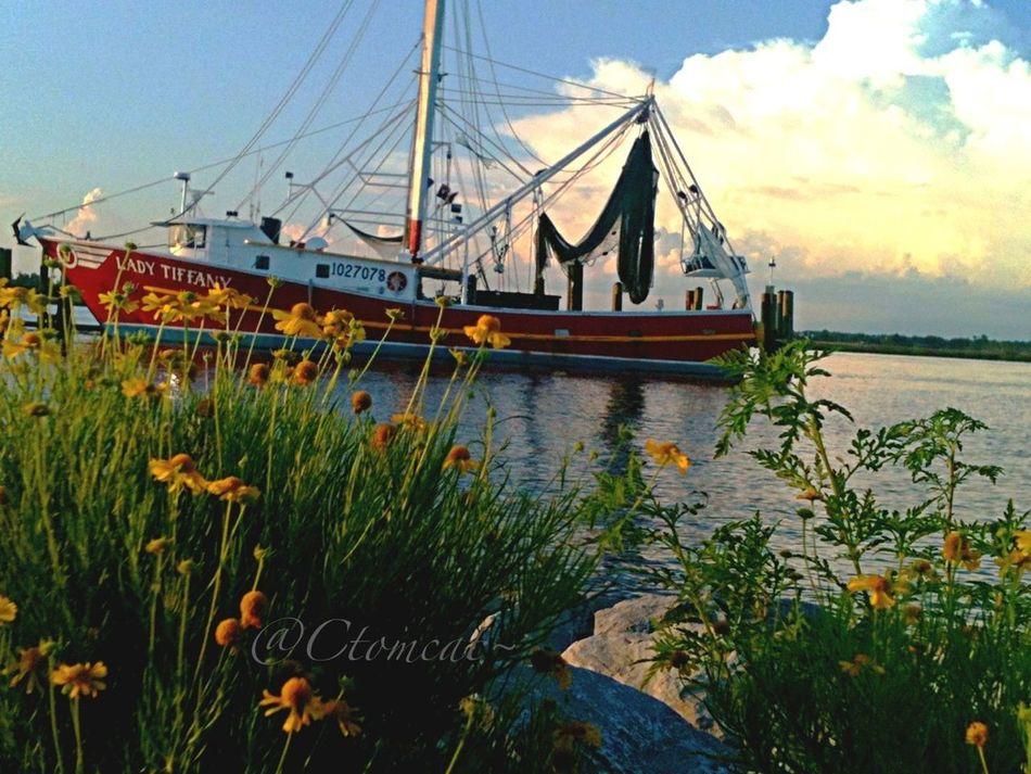 Flowerporn Water_collection Landscape_Collection EyeEm Best Shots