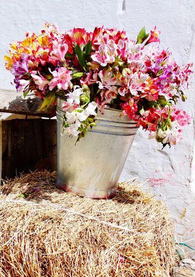 No People Plant Bouquet Flower