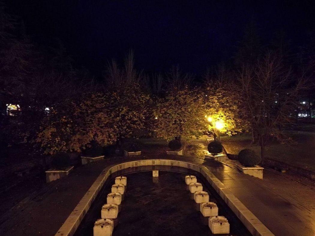 Illuminated Tree Night No People Alcoy Tranquility Fountain Winter Autumn Melancholy Rainy Night Cloudy Day