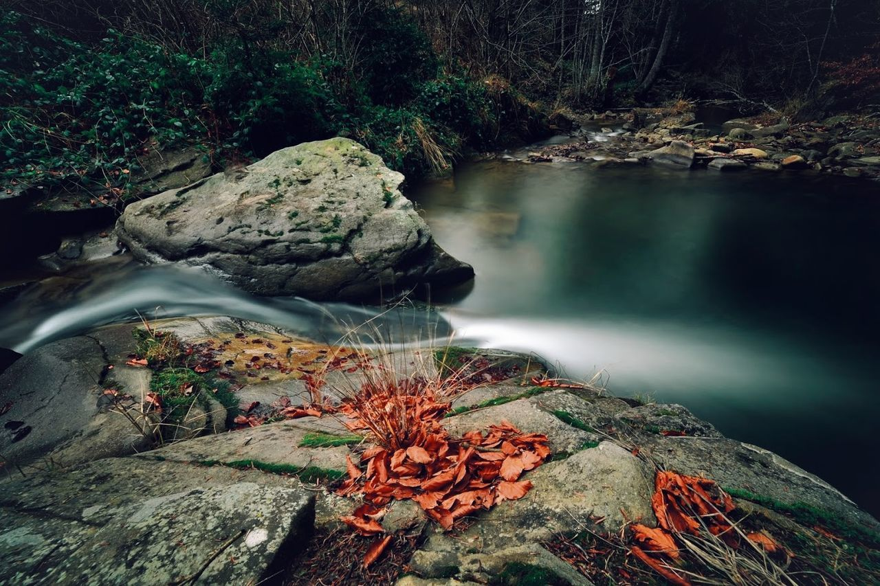 Beauty In Nature Charming Environment Forest Freshness Landscape Landscape_Collection Leaf Nature Nature Nature Photography Nature_collection No People Outdoors River Rock - Object Scenics Stream - Flowing Water Sunlight Tranquil Scene Tranquility Travel Destinations Tree Water Waterfall