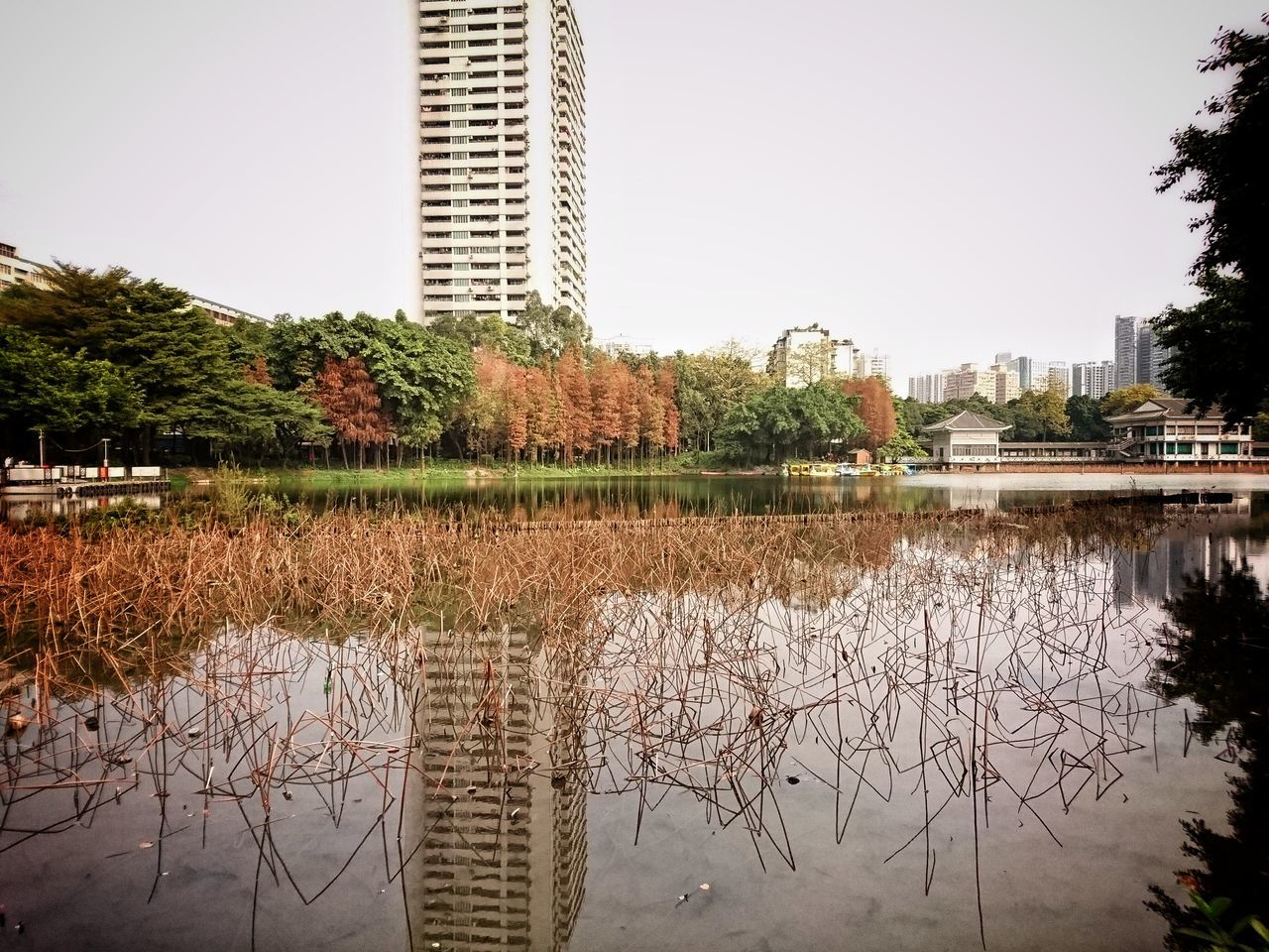 architecture, building exterior, built structure, tree, reflection, city, skyscraper, water, growth, no people, outdoors, day, nature, cityscape, sky