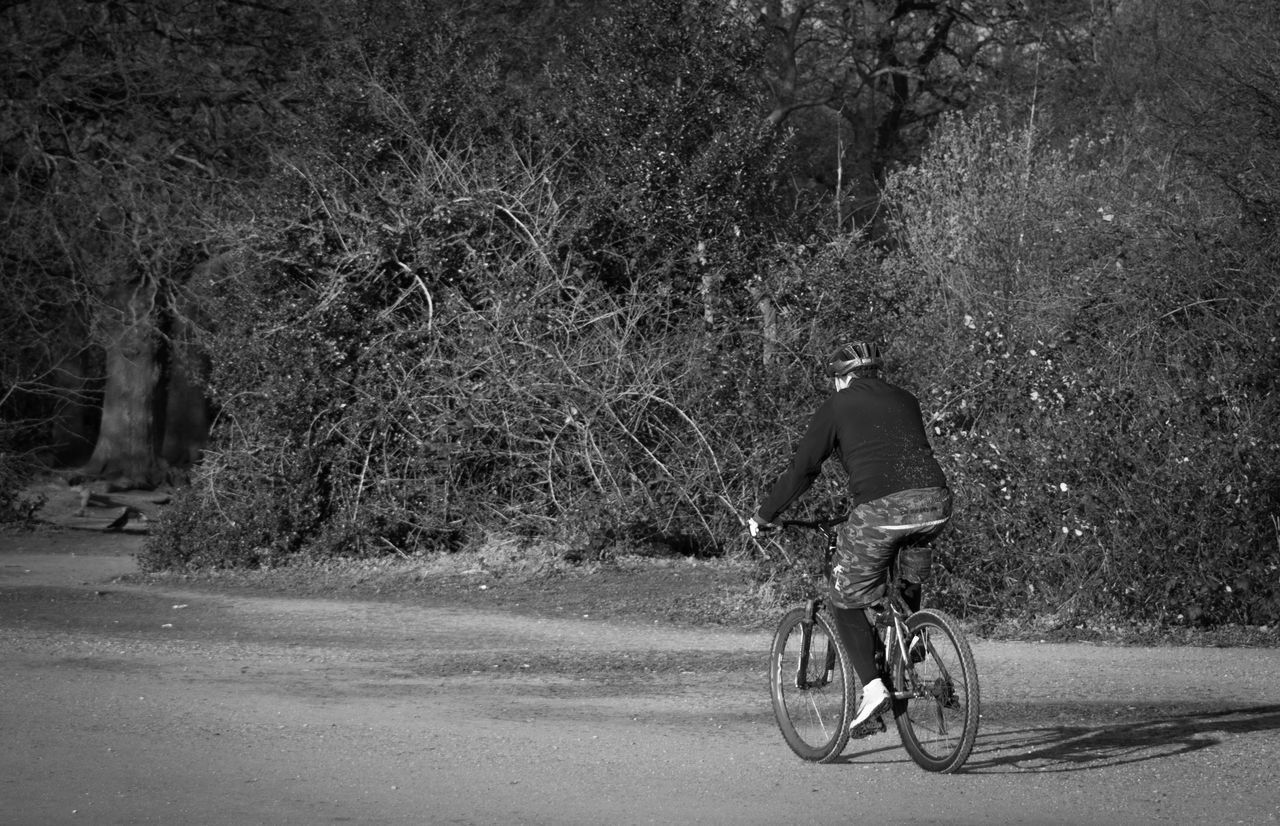 Rear View Of Man Riding Bicycle On Road Against Trees