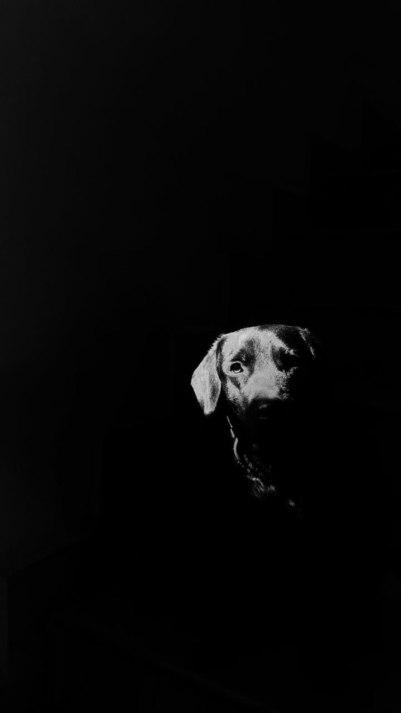 Black Background Dark Animal Themes Mammal No People Labrador Hdr_Collection Hdr Photography Dog Lover Doggy Love Pets Of Eyeem Blackandwhite Light And Shadow