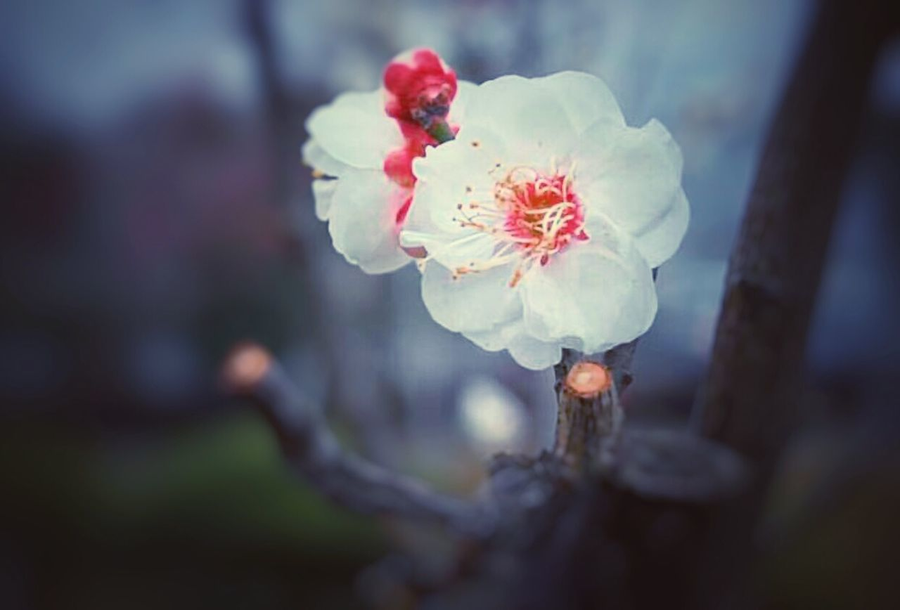 flower, beauty in nature, nature, fragility, close-up, no people, day, focus on foreground, flower head, growth, outdoors, springtime, freshness, tree