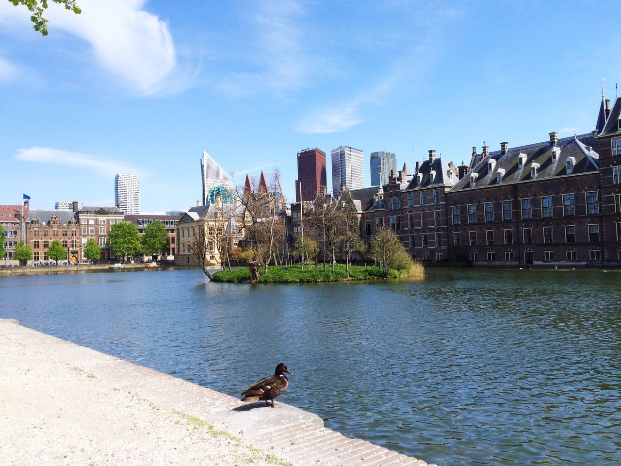 Beautiful stock photos of duck, Animal Themes, Animal Wildlife, Animals In The Wild, Architecture