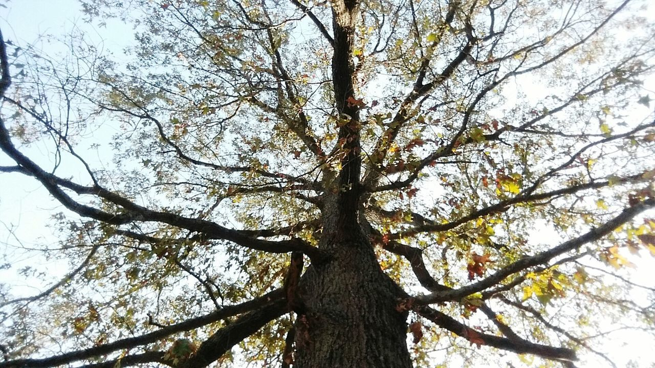 tree, low angle view, branch, growth, tree trunk, nature, day, beauty in nature, outdoors, no people, sky, close-up