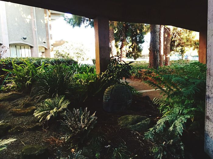 Architecture Amazonas Halfhead No People Freshness Plant Nature