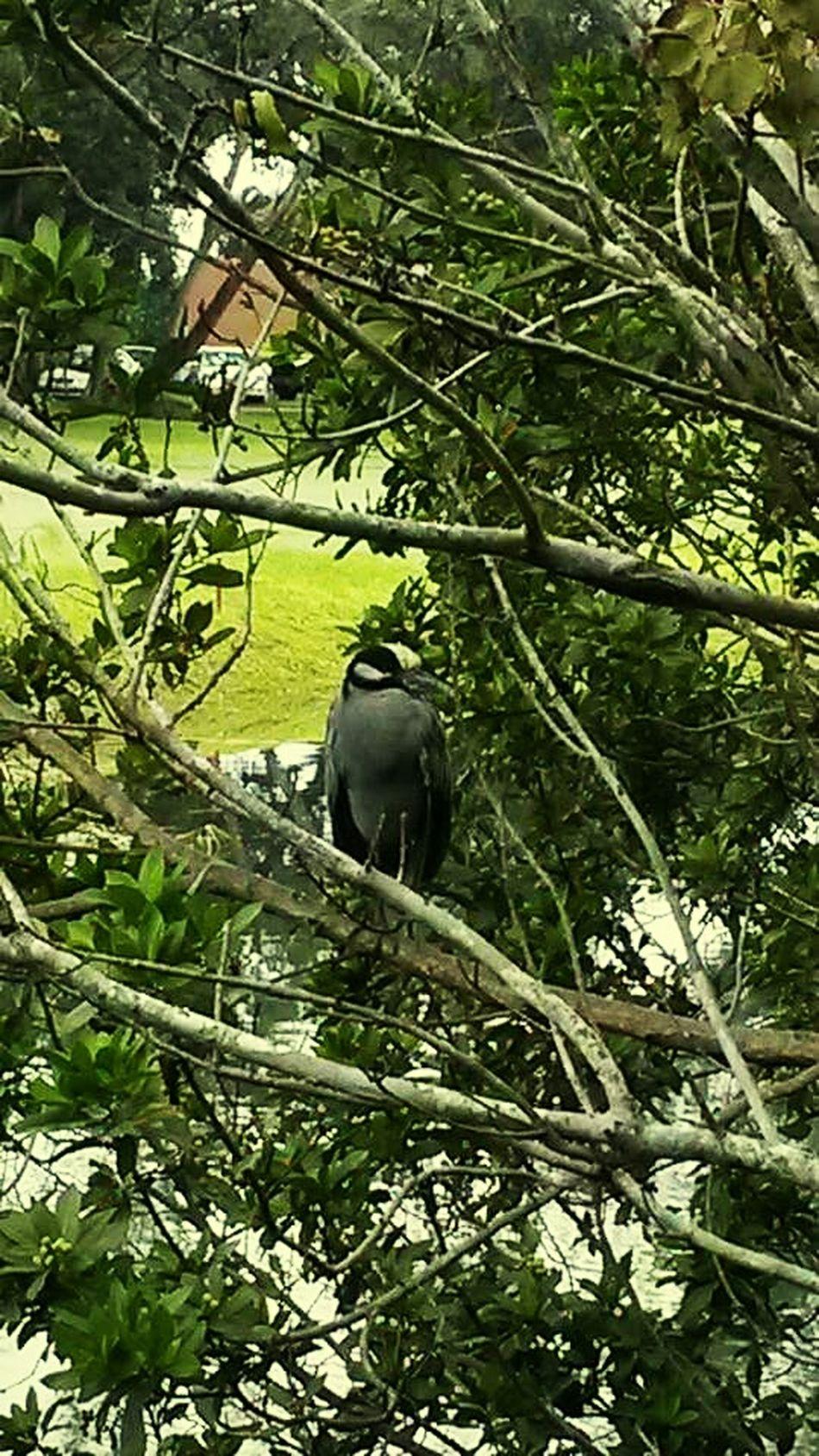 Natur!! Naturelovers Bird Photography