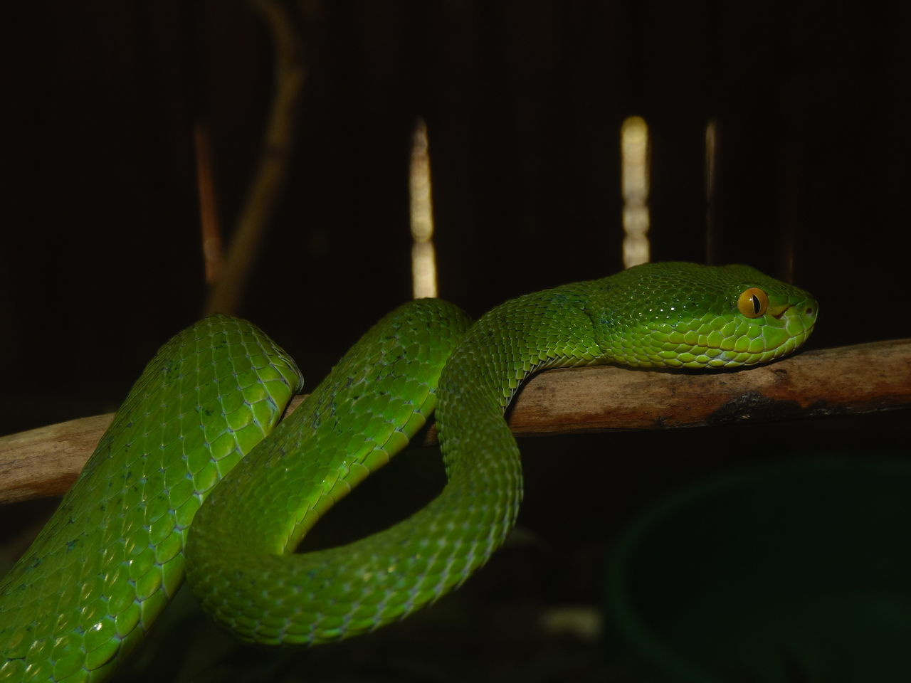 Viper  Dangerous Green Awesome_view Green Snakes /tree Snake Wildlife & Nature
