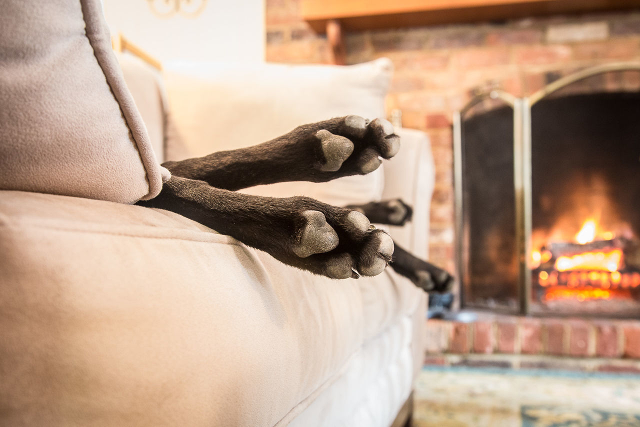 Black Dog Couch Dog Domestic Animals Fireplace Focus On Foreground No People Paws Relax