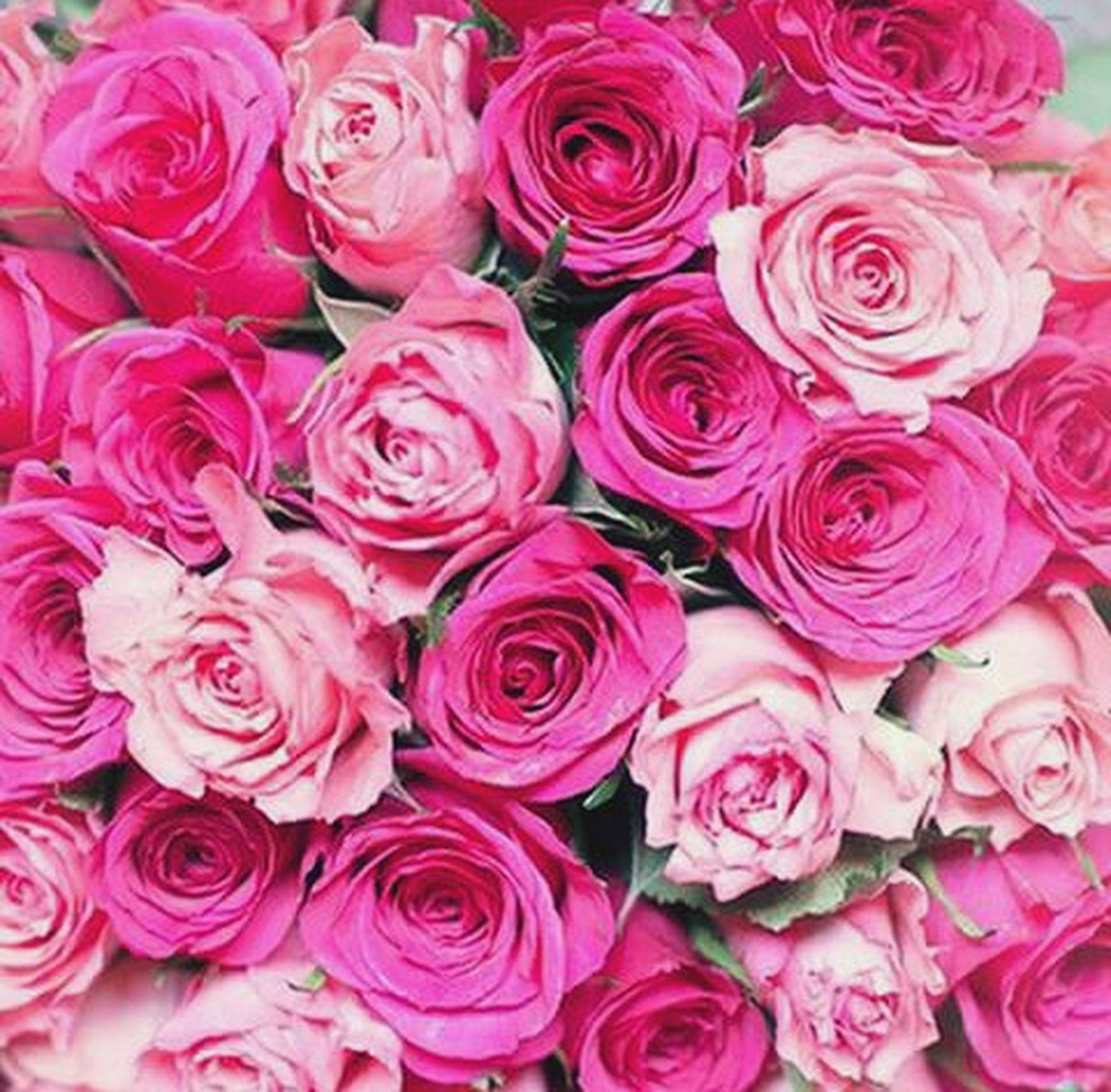 flower, freshness, petal, fragility, full frame, beauty in nature, flower head, backgrounds, rose - flower, growth, nature, pink color, abundance, rose, blooming, close-up, bunch of flowers, red, high angle view, plant