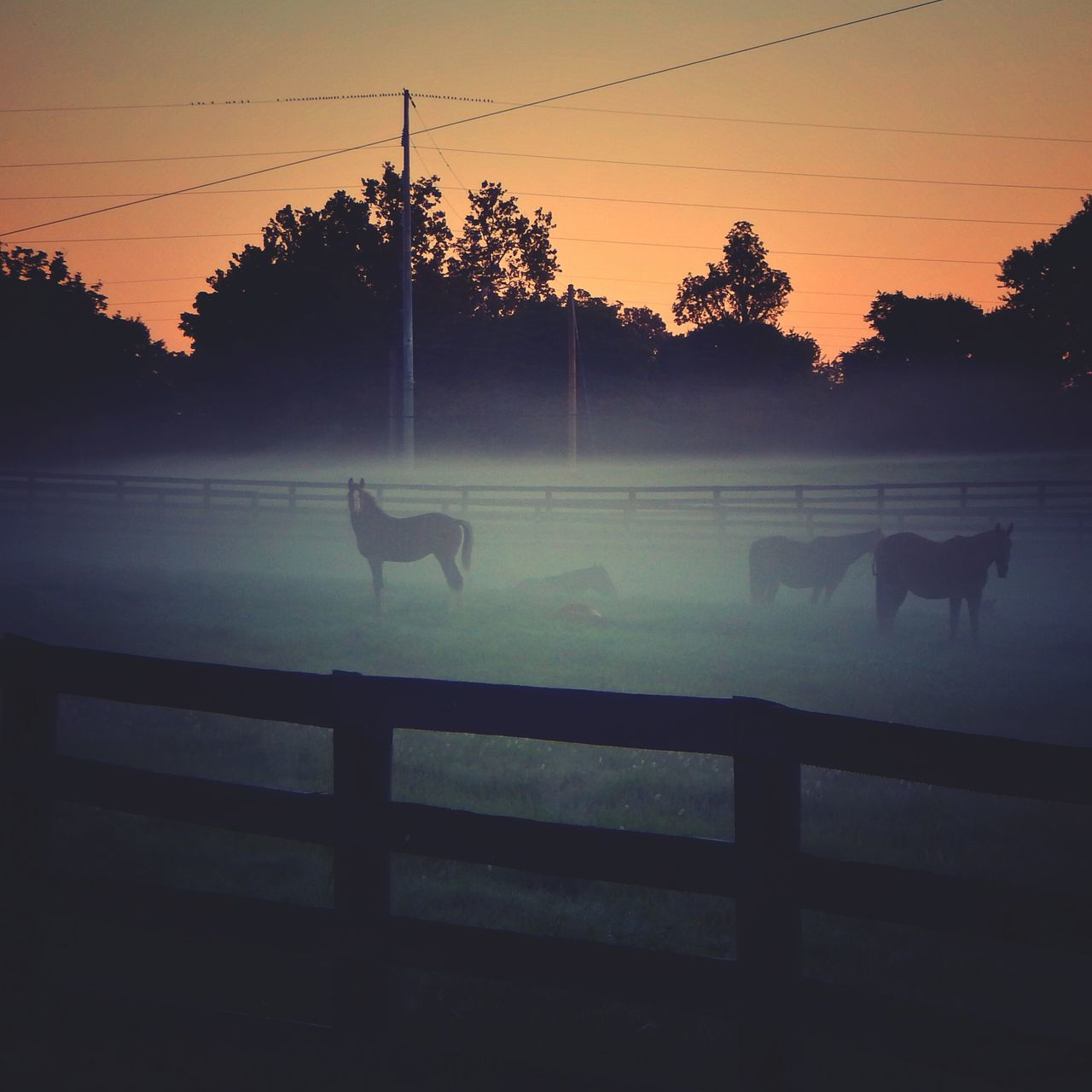 sunset, animal themes, domestic animals, horse, mammal, livestock, tree, silhouette, nature, grazing, no people, tranquil scene, paddock, outdoors, sky, rural scene, beauty in nature, day