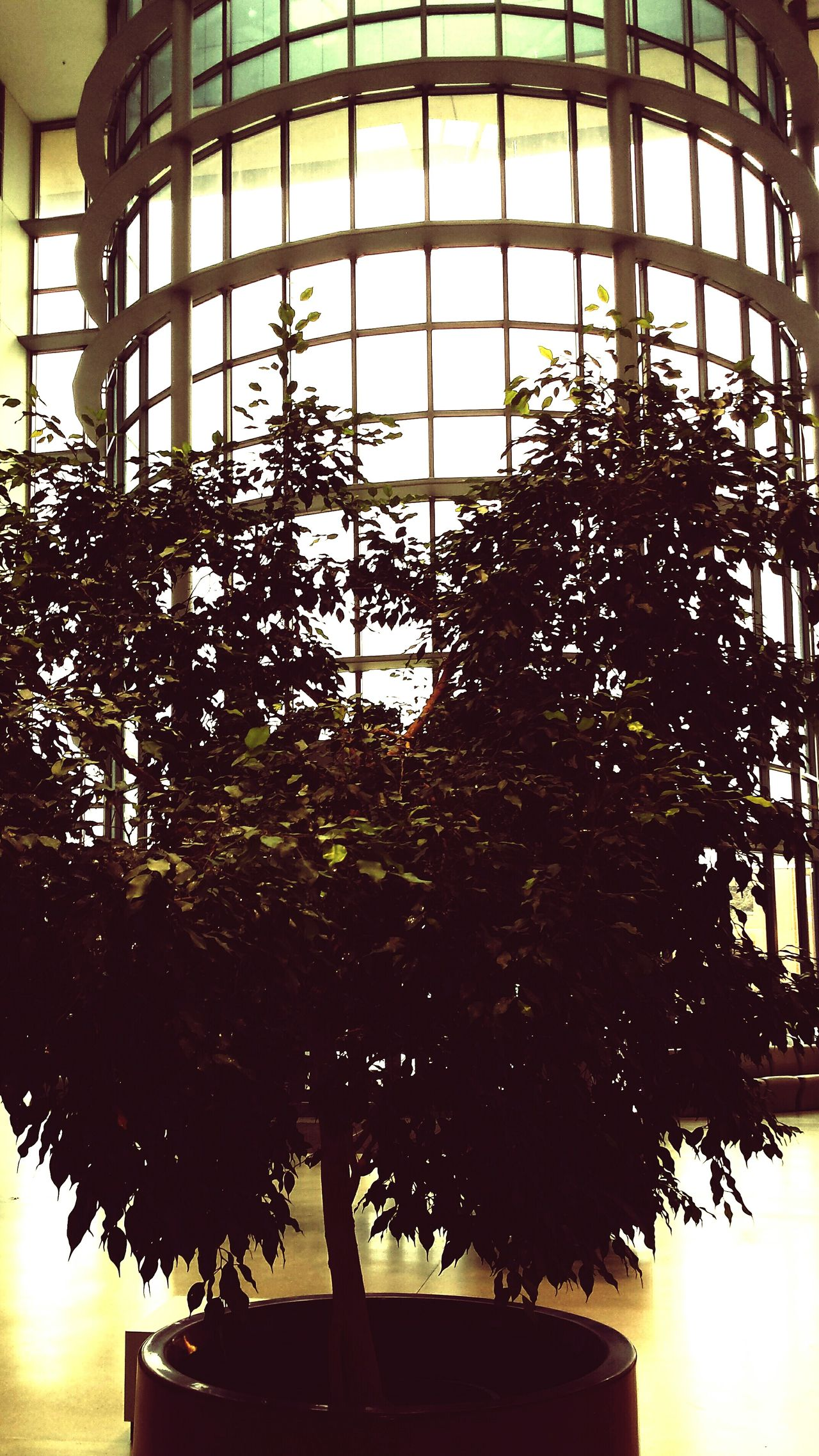 The dark side of the tree Growth Nature No People Indoors  Tree Day Plant Sky Architecture Windows Light And Shadow Light Squares Healing Appointment Upstate Medical Center Syracuse Ny First Eyeem Photo