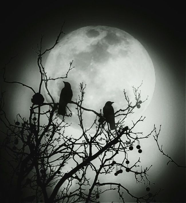 The Raven Darkness And Light Tadaa EyeEm Nature Lover Eye4emotions Dreams Eye4enchanting Full Moon Textures Mextures Poetry Poeticimage