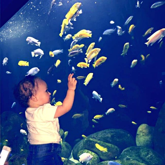 Fishes 🐠 Sea Life Clear Waters Rocks Dory ❤ Blue Yellow Nature Fish Life Special Moments FamilyTime Baby Daughter Love