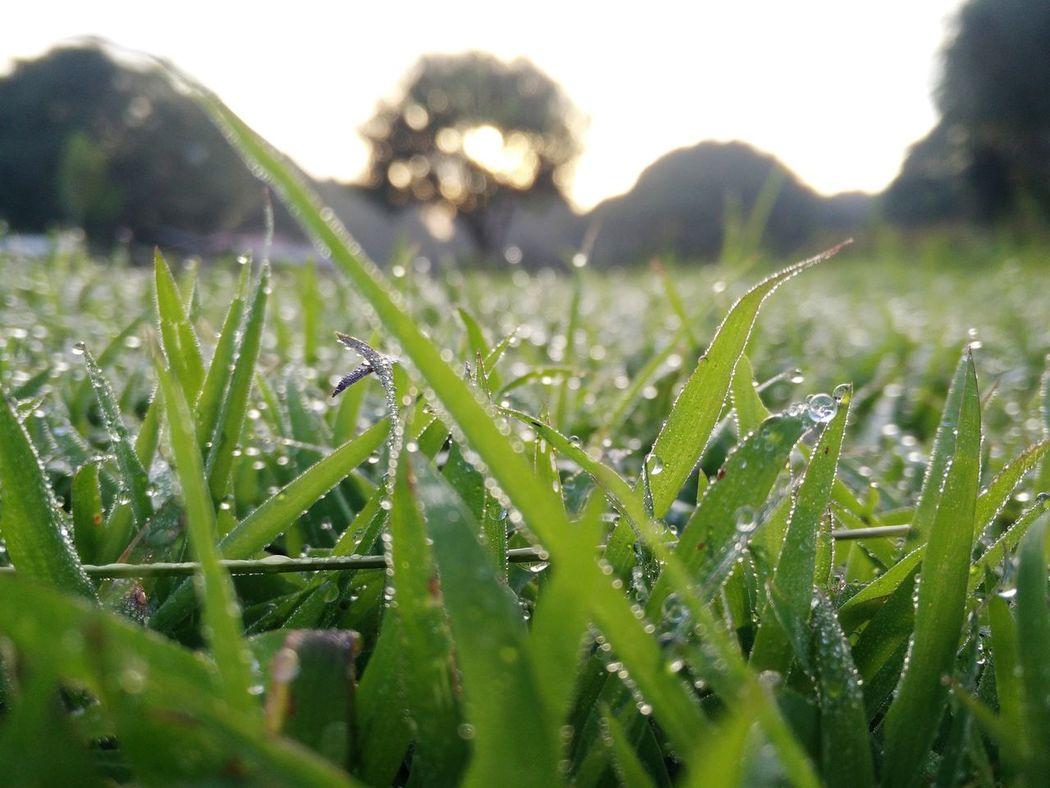 Early morning dew. Sunrise Sunday Morning Thegreatoutdoors-2015eyeemawards VSCO Vscocebu Vscophoto Vscocam Vscophilippines Refreshing Open Edit