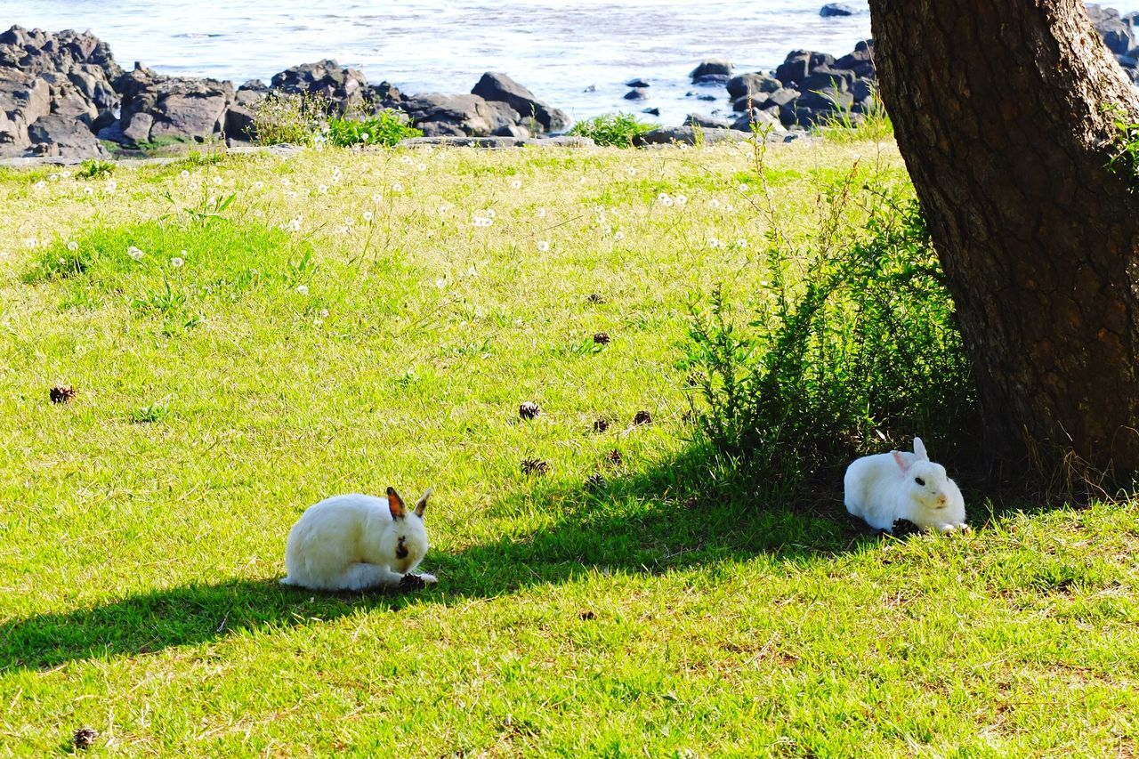Two Rabbits In Field