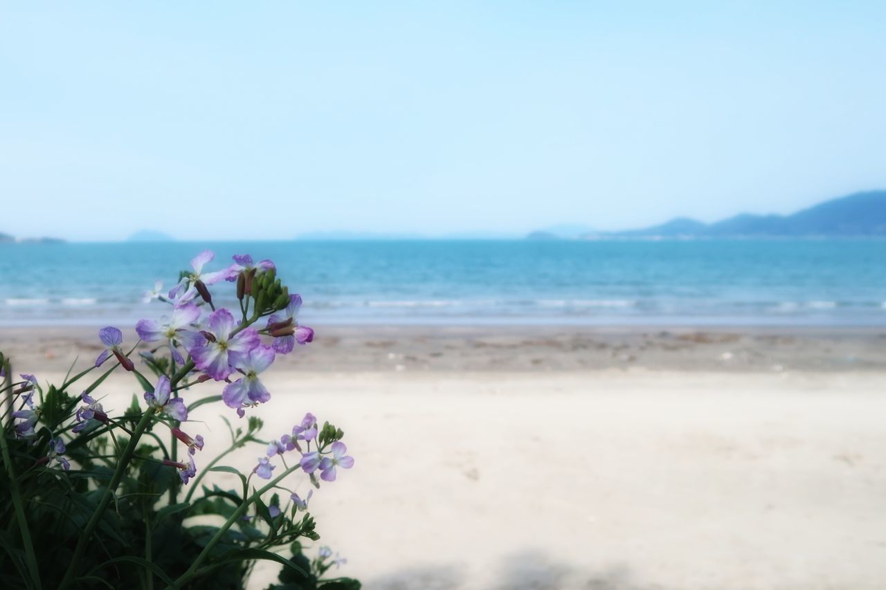 Sea Beach Flower Beauty In Nature Nature Horizon Over Water Sand Water Wave Outdoors Travel Destinations No People Scenics Sky Day Freshness Fragility Close-up Rhododendron 空 Wildflower 花 Beautiful Growth 春