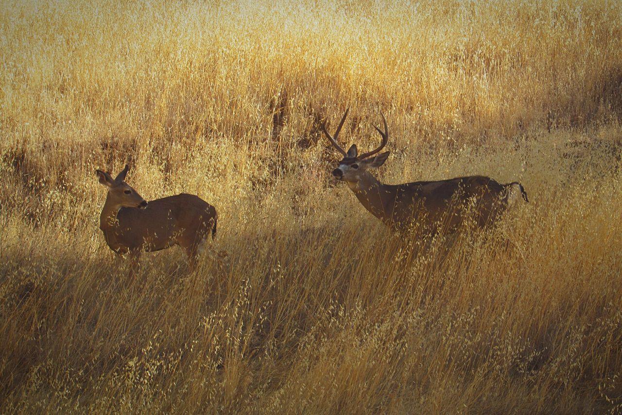Deersighting Deers Nature Beauty Peace D Nature Paso Roblesro