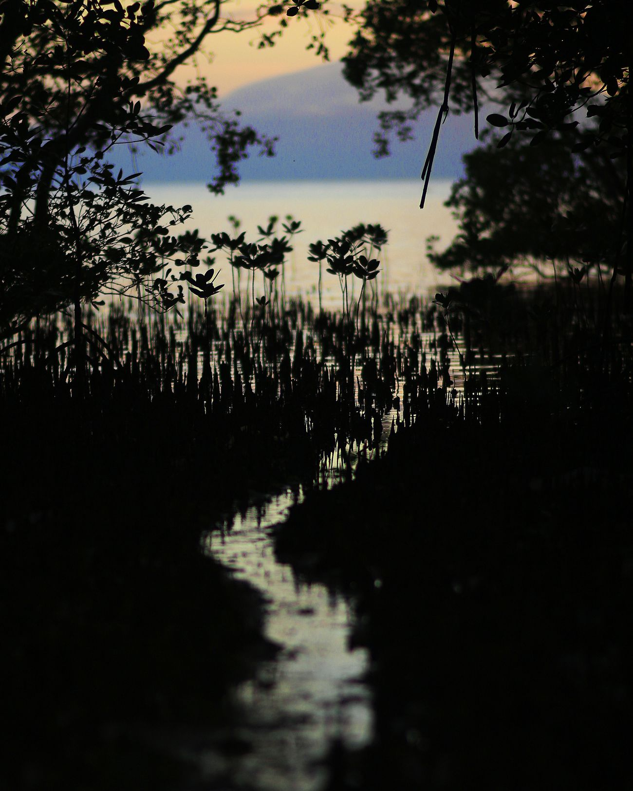 Beachphotography Mangroves Beauty In Nature Nature Silhouette Shadows Sea