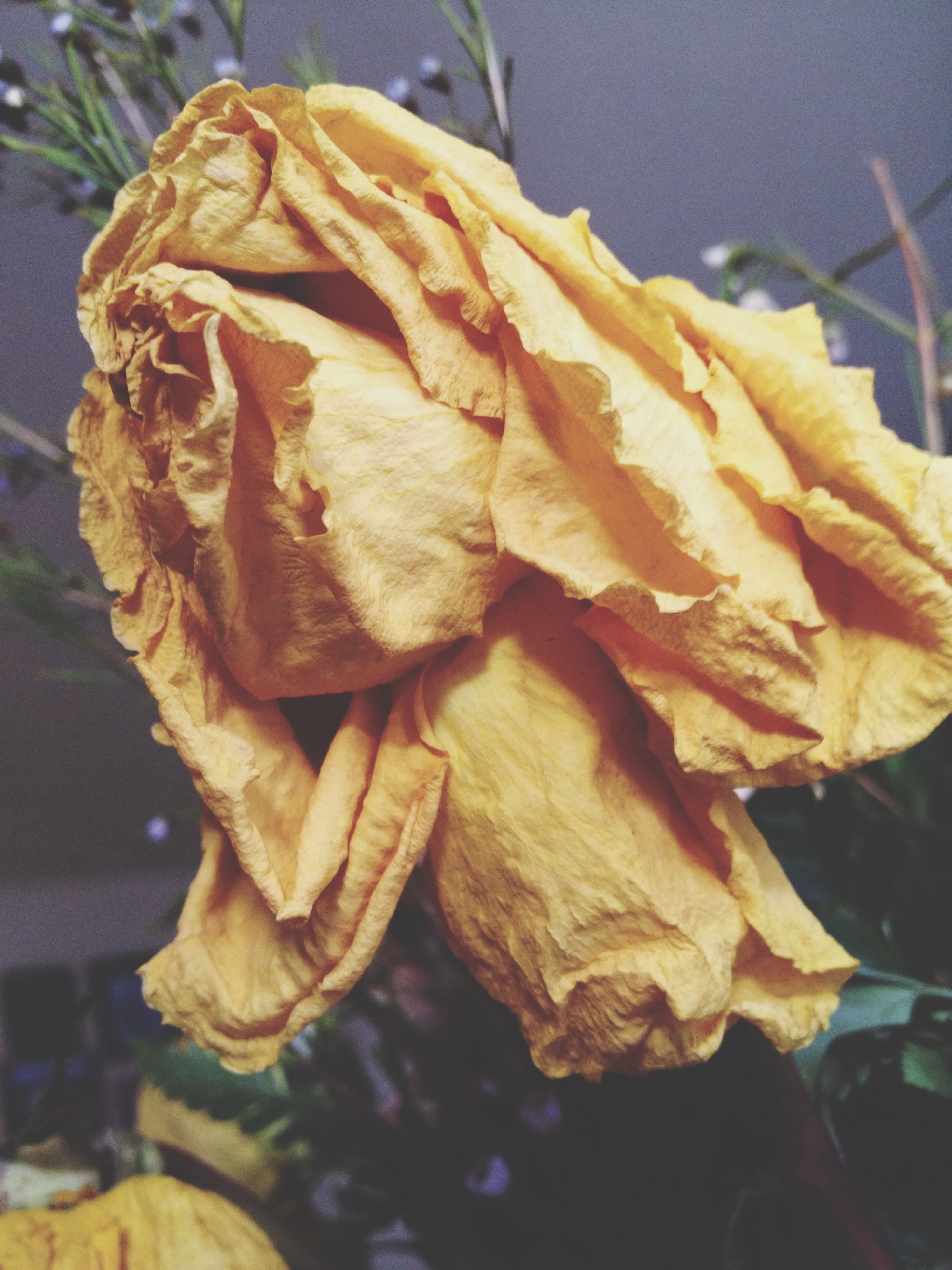 close-up, focus on foreground, freshness, yellow, food, orange color, indoors, food and drink, flower, fragility, still life, no people, dry, day, rose - flower, nature, high angle view, leaf, selective focus