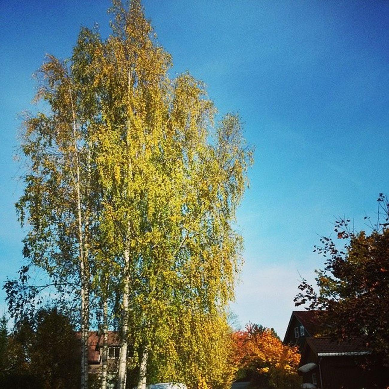 Ilovenorway Ilovenorway_akershus Follo  Worldunion wu_norway autumn høst ås tre tree