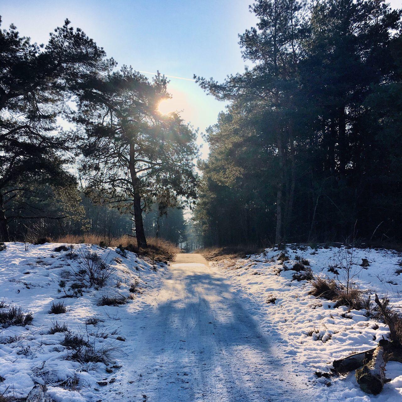 Sunny Winter Day Winter Walk Winter Wonderland Sun And Snow