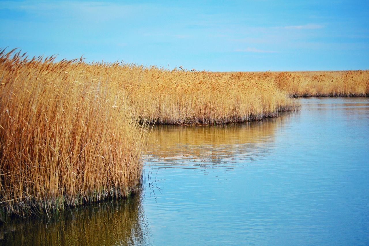 Cereal Plant Outdoors Nature Sky Rural Scene No People Water Beauty In Nature Reflection Spring Time Springtime Pattern Plant Bulrush Bulrushes Grass Scenics Growth Landscape Beauty In Nature Tranquility Spring Backgrounds Beach Sea