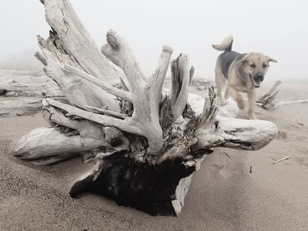 Pets Dog Animal Themes One Animal No People Friendship Sand Nature Mammal Claw Day Outdoors