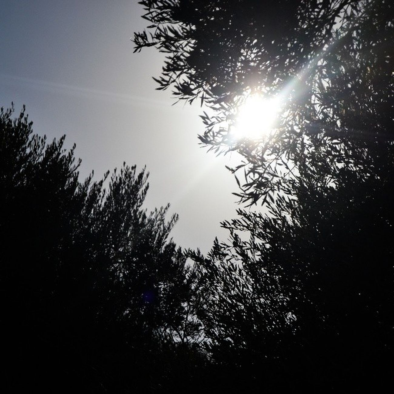 شروق الشمس شجر ورق_شجر عمان الاردن jordan discoverjo discoveramman seeamman beamman beautifuljordan beautifullamman beautifulnature sun sunrise sky_masters sky leaves trees spiritofjordan
