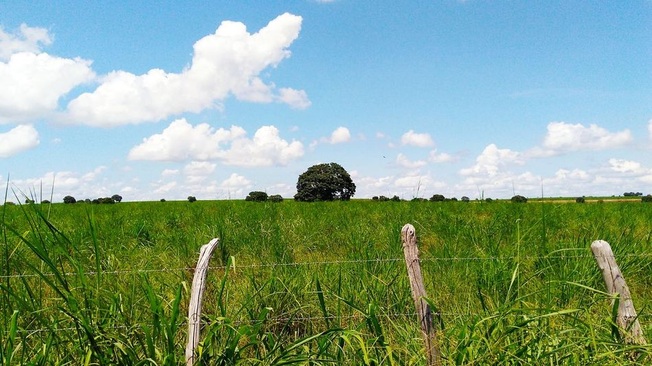 Cloud - Sky Agriculture Sky Growth Field Day Outdoors Cereal Plant Rural Scene