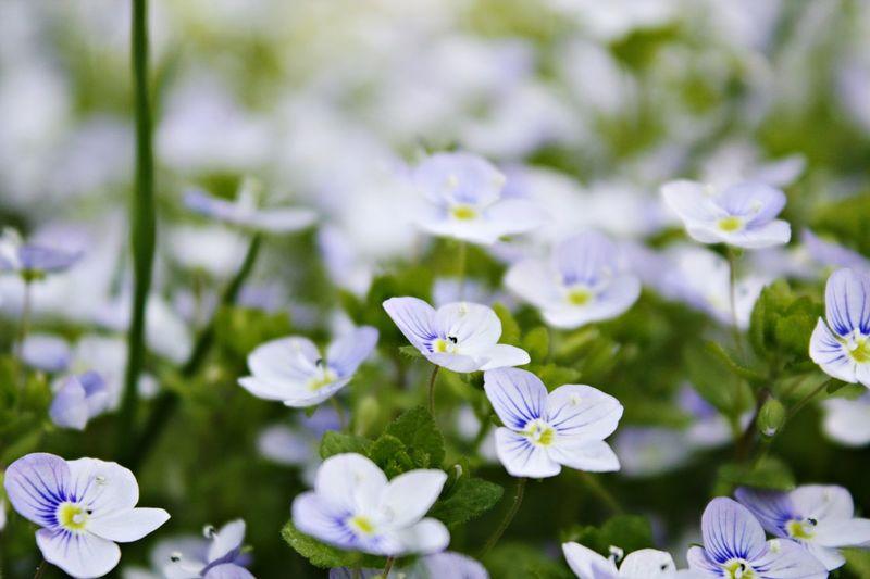 Summer Flower Nature Lifestyles